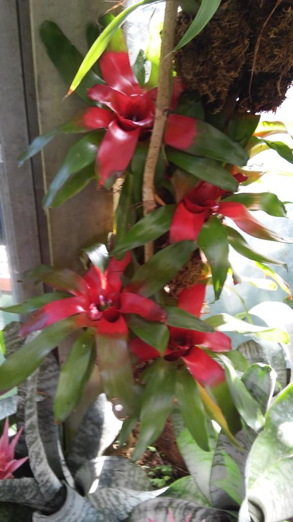 Giardino di Ischia (forse recuperate) (31)
