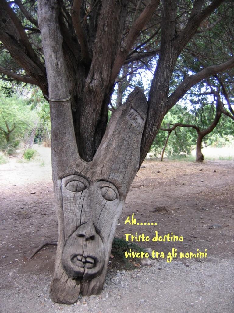 Il lamento dell'albero